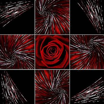 Roses are Red by Monark Gallery