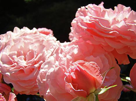 Baslee Troutman - Roses art prints Floral Pink Rose Flowers Baslee Troutman