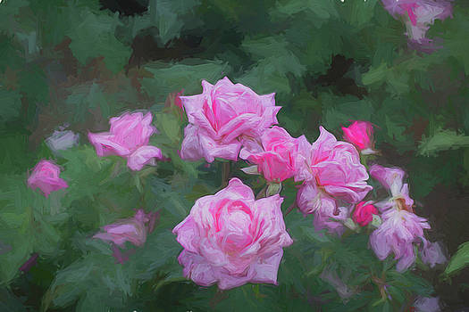 Roses at Longwood by Jeff Oates Photography