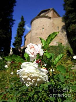 Roses at Villa d'Este by Katrina Perekrestenko