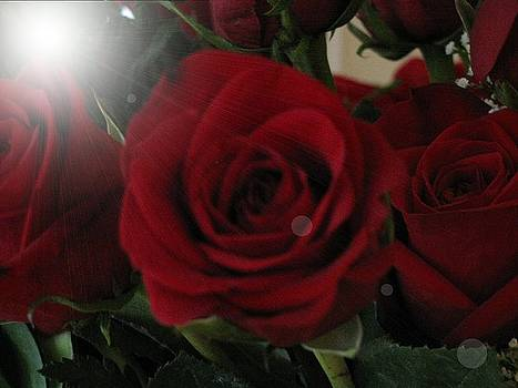 Roses by Camera Candy