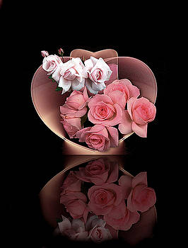 Roses by Diane McCool-Babineau