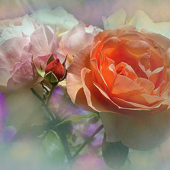 Roses for summer by Jeff Burgess