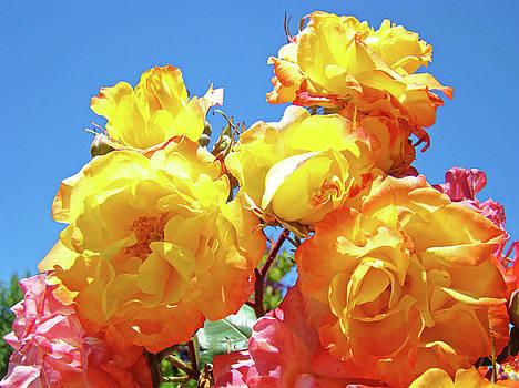 Baslee Troutman - Roses Garden Summer art print Blue Sky Yellow Orange
