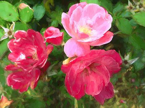 Roses In Autumn by Debra Lynch
