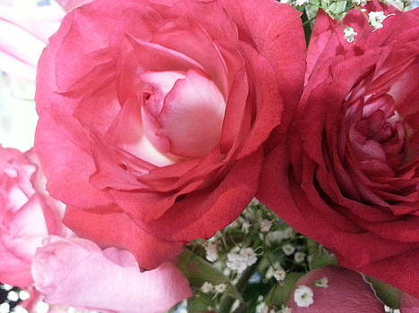 Roses  by Janene Hall