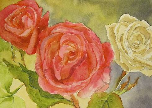 Roses by Kim Lucianovic