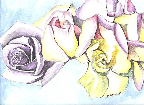 Roses study by Darren Cannell