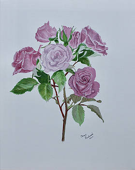 Roses by Terry Frederick
