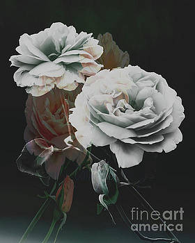 Roses2 by Candydash Images