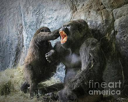 Rough-housing with Dad - Gorillas by Jan Mulherin