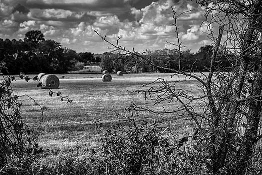 Round Bales In Texas 003 by Lon Casler Bixby