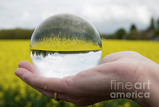 Compuinfoto - Round glass ball rapeseed field