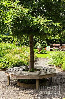 Sophie McAulay - Round tree bench