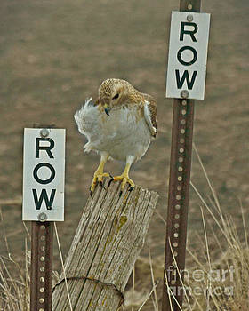 Row Hawk Row by Kathy M Krause