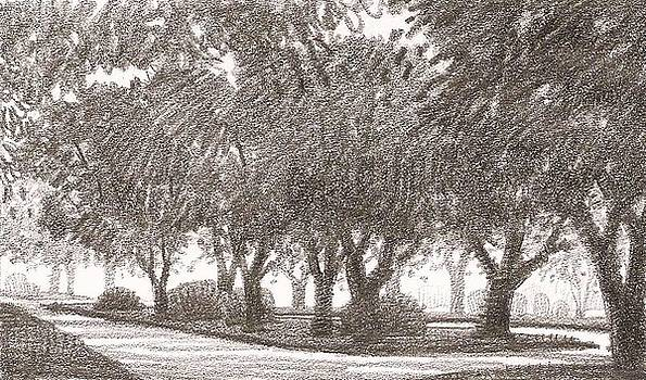 Row of Oaks Sketch 2 by Kevin Lawrence Leveque