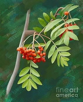 Rowan Tree by Ivana Westin