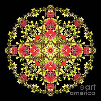 Royal Quinsythia Mandala by Karen Jordan Allen