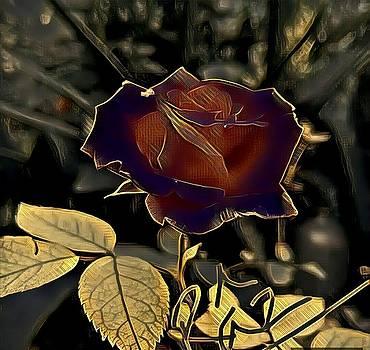 Rizwana A Mundewadi - Royal Rose