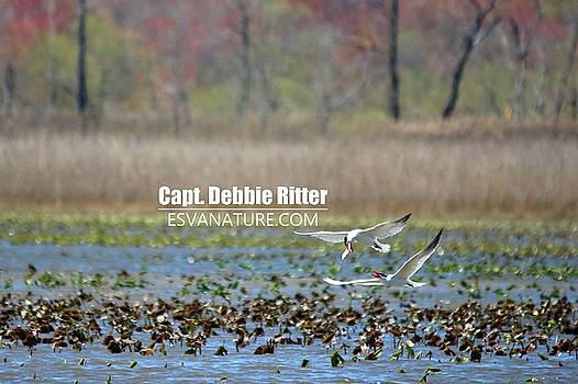 Royal Tern 1068 by Captain Debbie Ritter