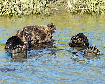 Rub a Dub Dub A Bear in his Tub by Don Mennig