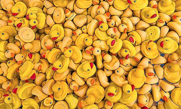 Rubber Duckies by Steve Siri