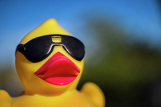 Rubber Ducky in the Sun by Alida Thorpe