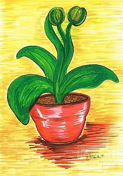 Rubber Plant by Teresa White