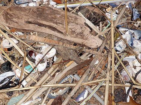 Rubbish by Bill Ades