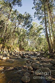 Rubicon River by Linda Lees