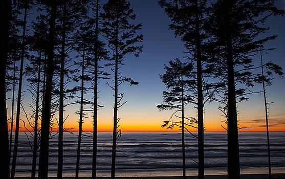 Ruby Beach Trees #4 by Timothy Johnson