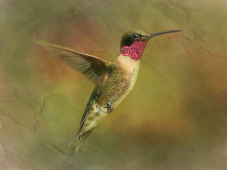 Ruby throated Hummingbird Inflight by Sandi OReilly