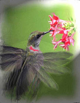 Ruby Throated Hummingbird by Richard Nickson