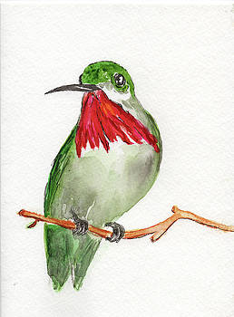 Ruby Troated Hummingbird by Doris Blessington