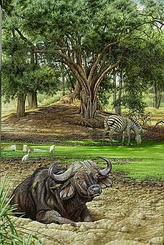 Ruckomechi buffalo by Eric Wilson