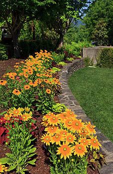 Jill Lang - Rudbeckia Garden