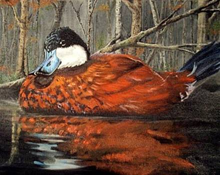 Ruddy on the slough by Jim Wetherington