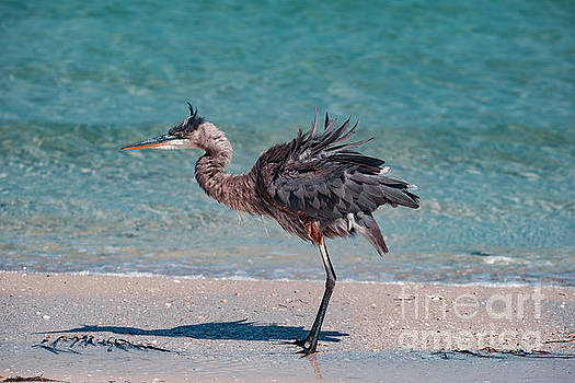 Ruffled Heron by Eric Killian