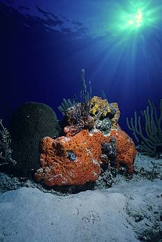 Don Kreuter - Rum Cay Rainbow