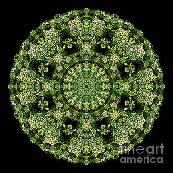 Rumex Crispus Mandala by Karen Jordan Allen