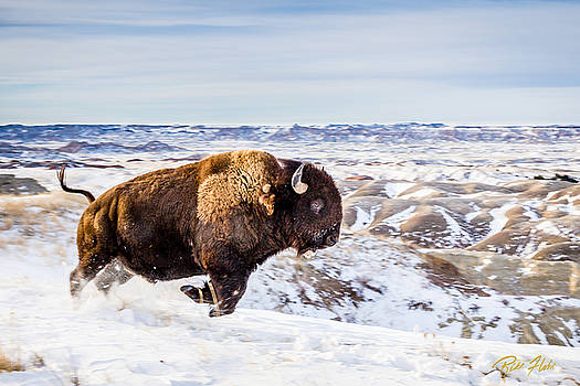 Running Bison in Winter by Rikk Flohr