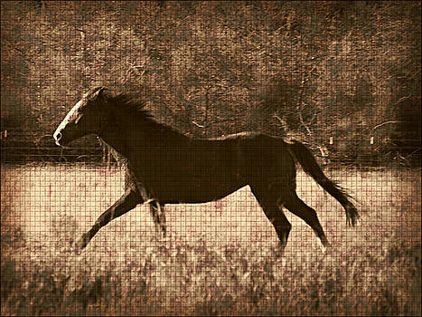 Running Free After Rescue by Shannon Story