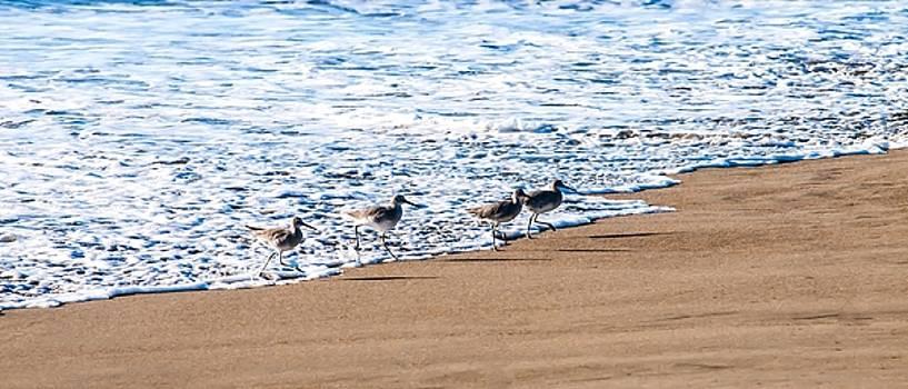 Running From The Tide by Sherri Meyer