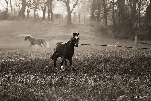 Running Horse by Scott Fracasso