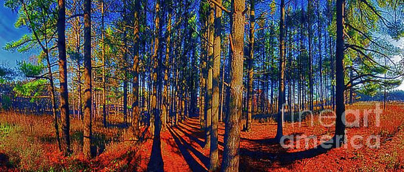 Running Path Pine Grove Crystal Lake Il JELE2136 Panorama by Tom Jelen