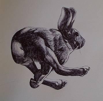 Running Rabbit by Kellie Hogben