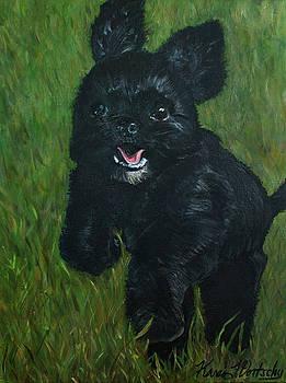 Running ShihTzu by Karen Dortschy