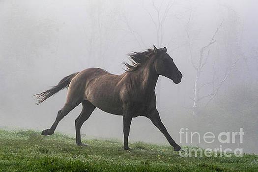 Running Through the Fog by Carol Walker