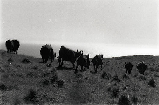 Erik Paul - Running With Cows