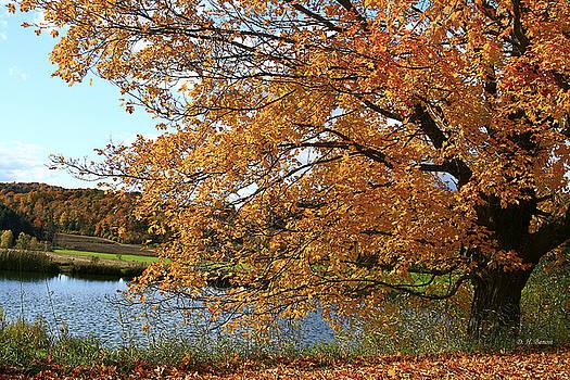 Deborah Benoit - Rural Autumn Country Beauty